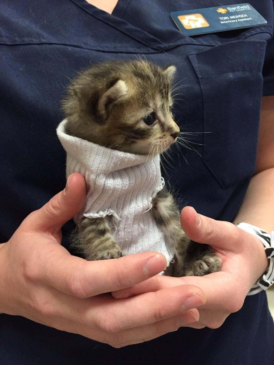 kitten in sweater 4