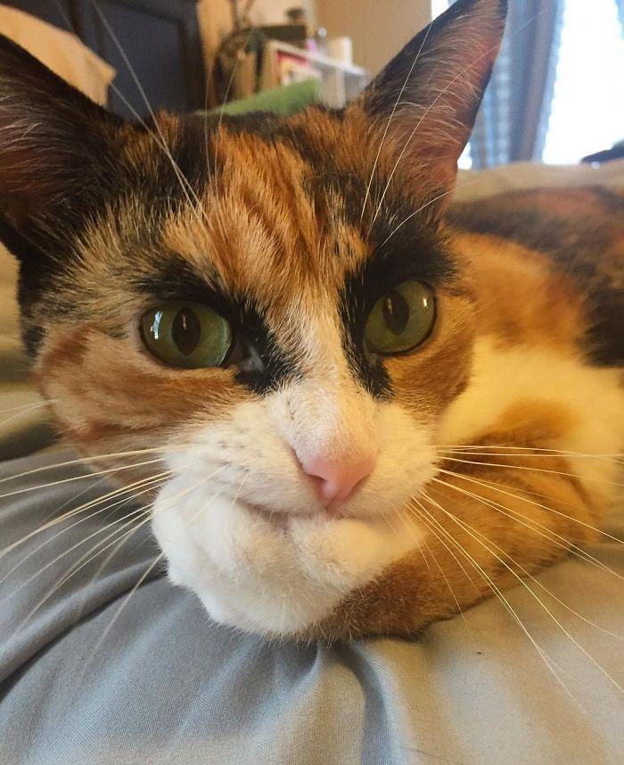 crazy eyebrow cat 3