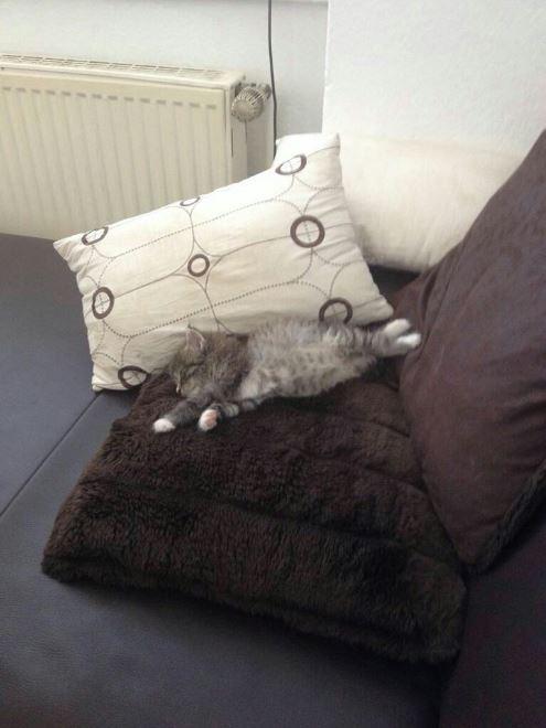 floofy taking a nap
