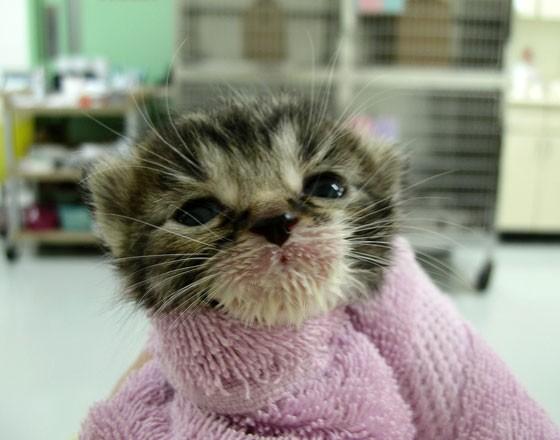 kitten with milk mustache 8