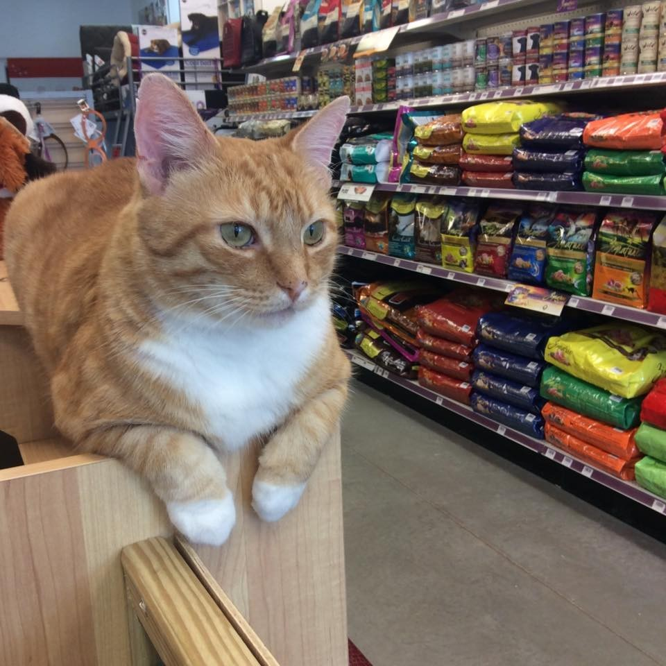 andy the cat at the pet store