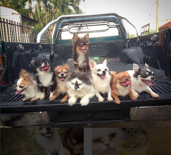 yuta family in truck