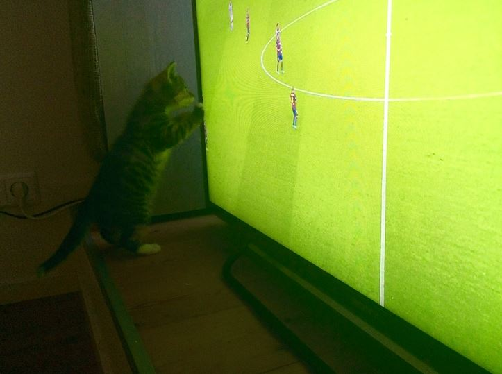 ollie pawing at the soccer match