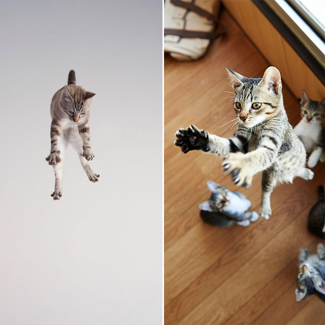 floating kitty 8
