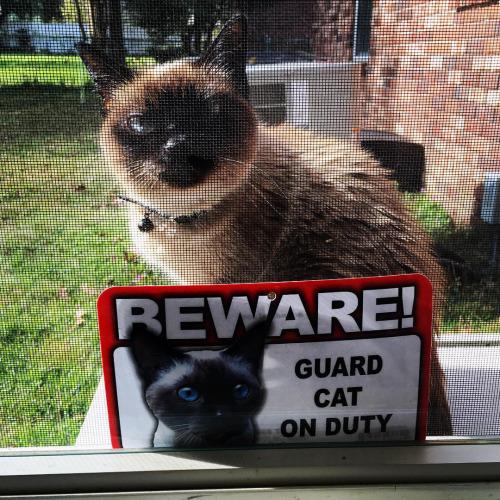 guard cat on duty 10