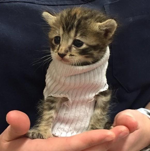 rescue kitten in sweater