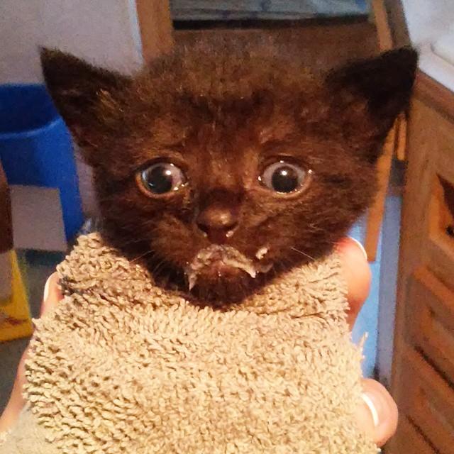kitten with milk mustache 6