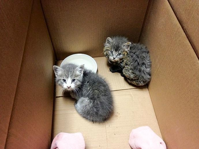 py and mannie rescued in a box
