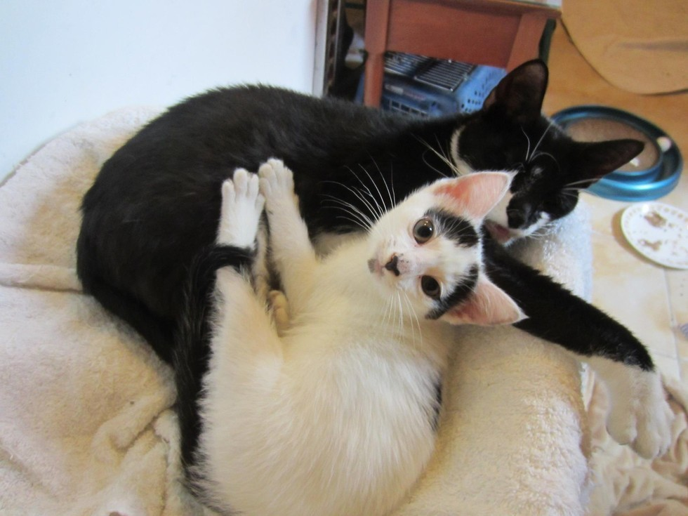 sweetie and jaax cuddling