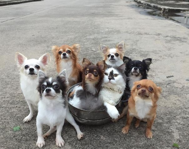 This Family Has Eight Dogs A Cat And A Hamster Who Love