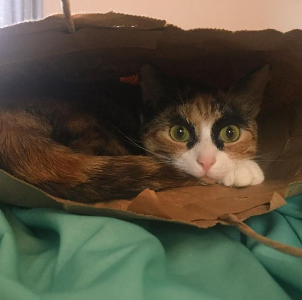 crazy eyebrow cat 10