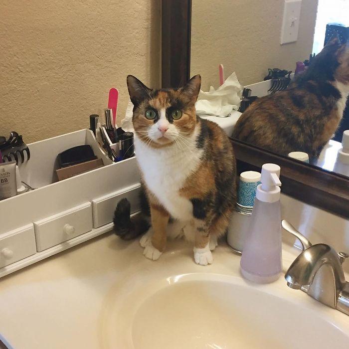 crazy eyebrow cat 7