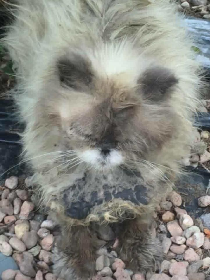 lendy the matted cat 2