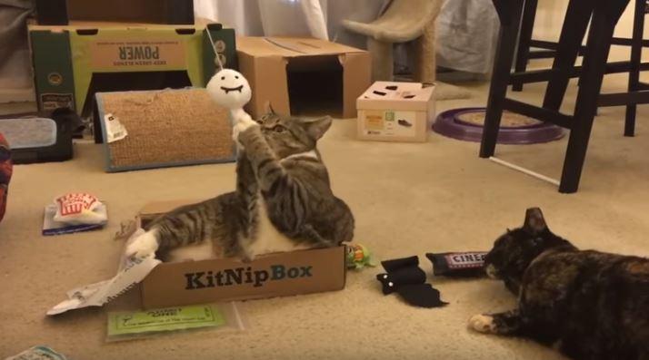 minnie and sylvia kitnipbox