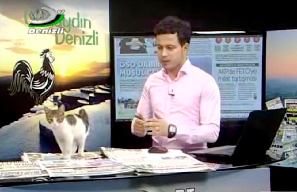 kitten on live tv