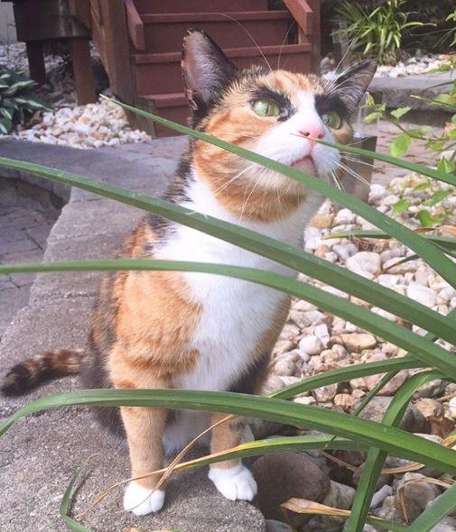 crazy eyebrow cat 11