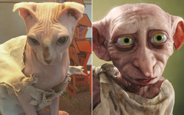 dolores and dobby  sc 1 st  I Iz Cat & This naked catu0027s Dobby costume is purrfectly magical! (Gallery)
