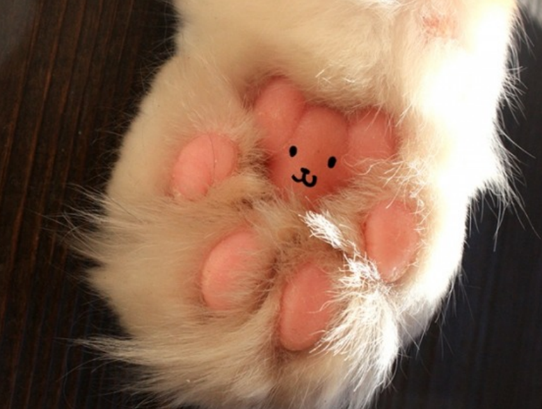 What Should Your Cat S Paw Pads Look Like