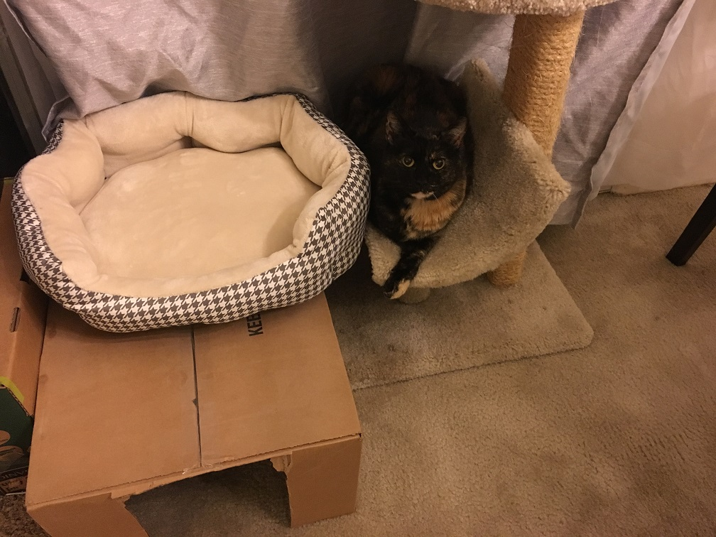 tortie in cat tree next to bed