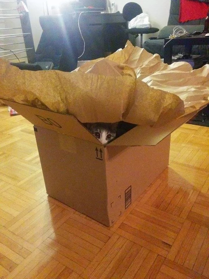 tiny in the box