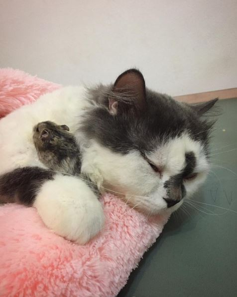 cat and hamster cuddling