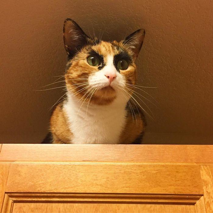 crazy eyebrow cat 4