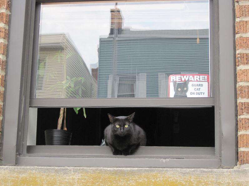 guard cat on duty 7