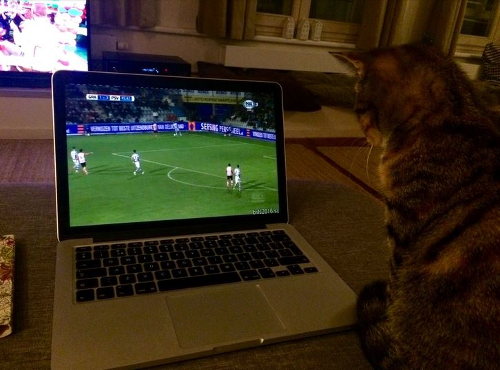 ollie watching the game on laptop