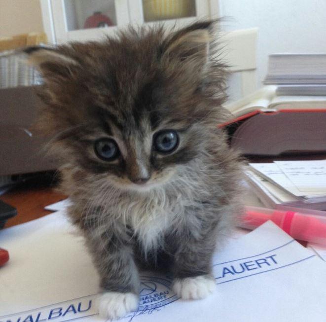 floofy the kitten