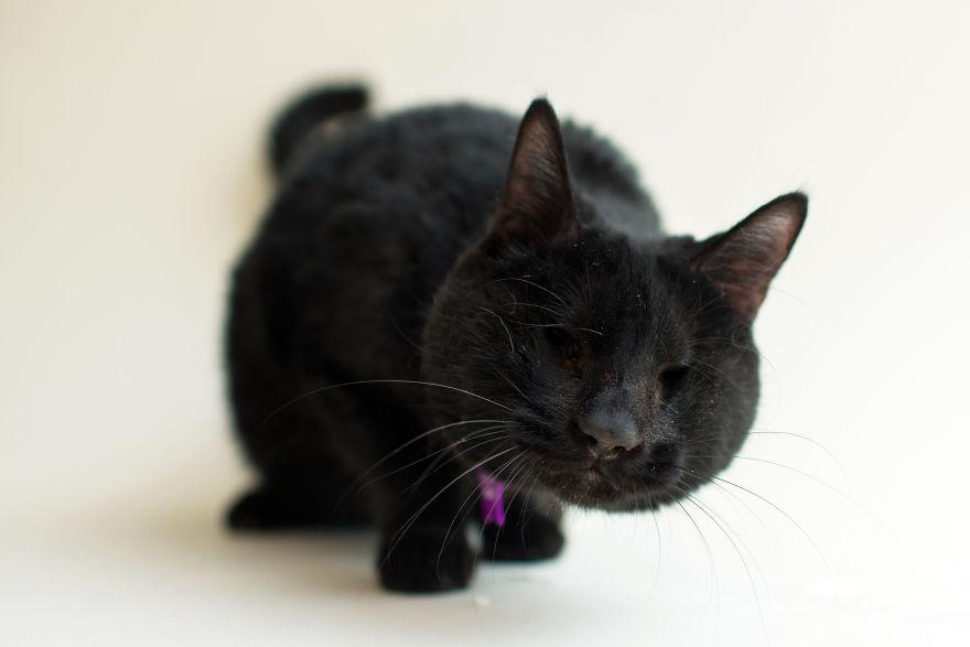 ember darkmoon the cat