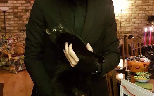 cat head costume 11