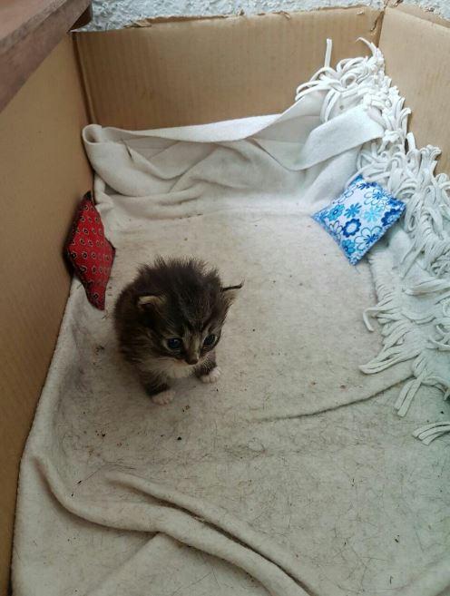 kitten left in a box on the balcony