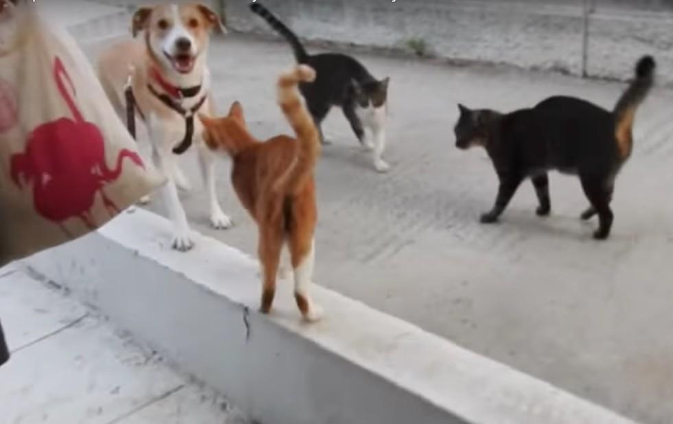 meli and kitties