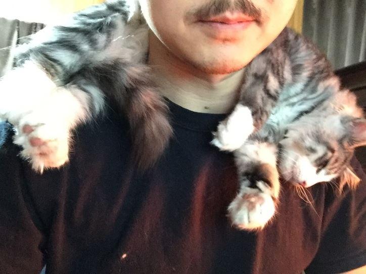 cat scarf 14