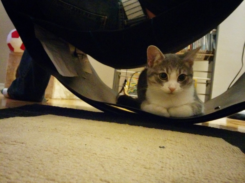 tiny hiding under chair