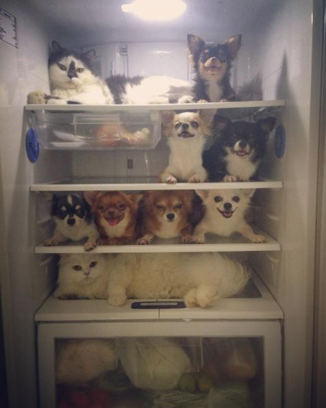 yuta family in fridge