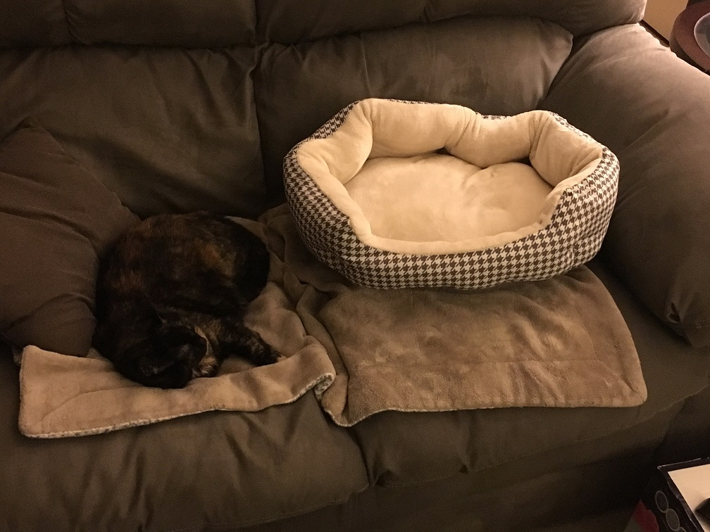 tortie on couch instead of bed