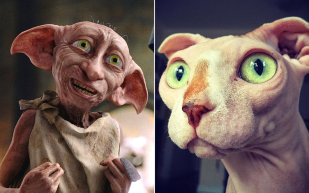 dobby and dolores green eyes