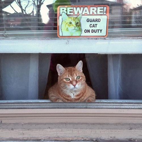 guard cat on duty 3