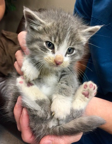 mannie the kitten