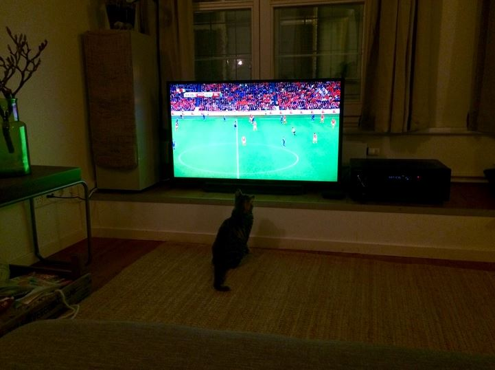 ollie watching another soccer match
