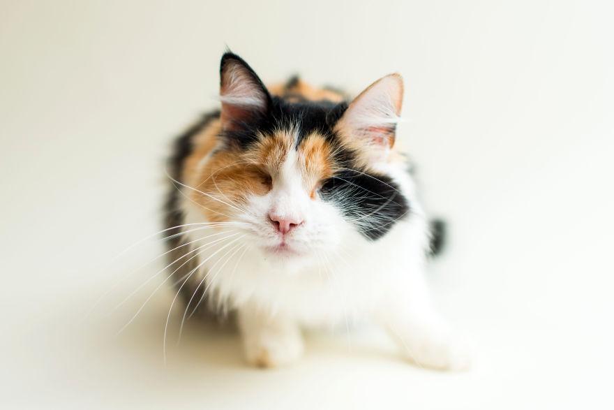 pixie the cat