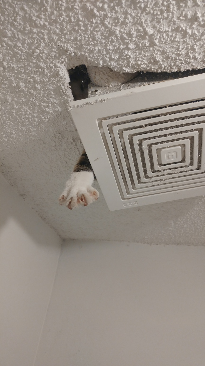 cat pawing through the attic