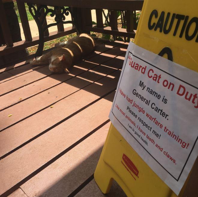guard cat on duty 5