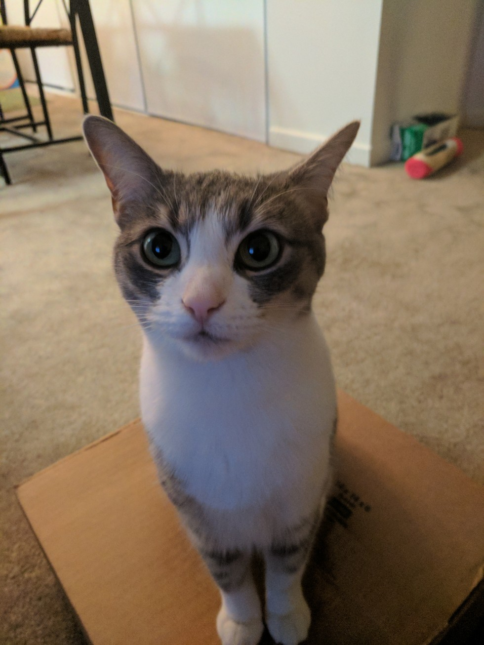 tiny the cat big eyes
