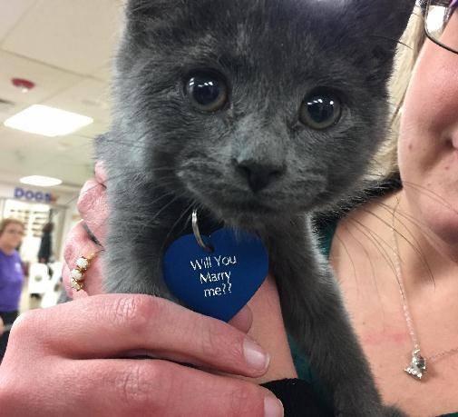 kitten proposal 2