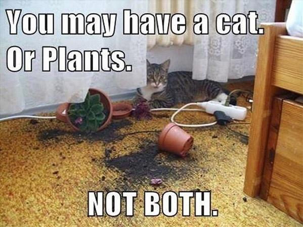 cat plant logic