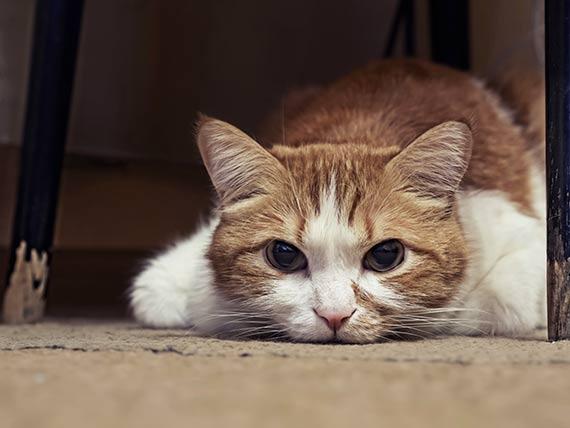 sick cat 2