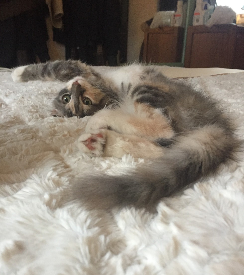 margot the cat 1