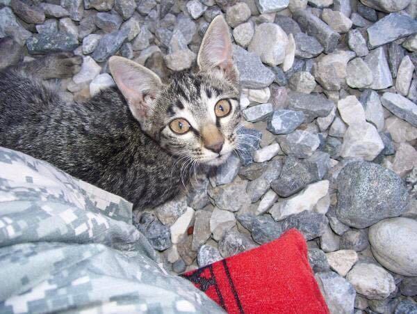 felix the kitten